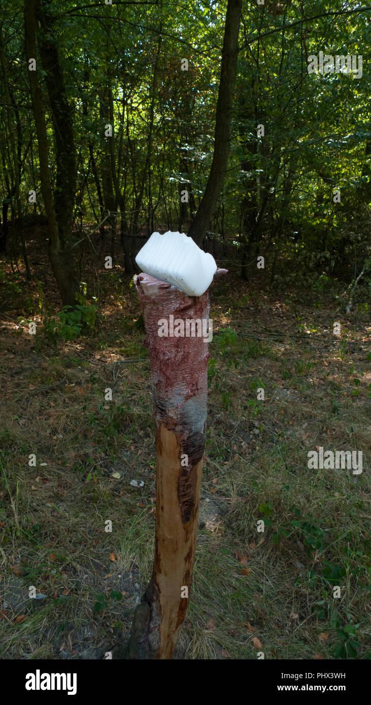 Un sale di pietra, lickstone per animali selvatici come cervi e caprioli posto su un tronco di albero nella foresta Foto Stock