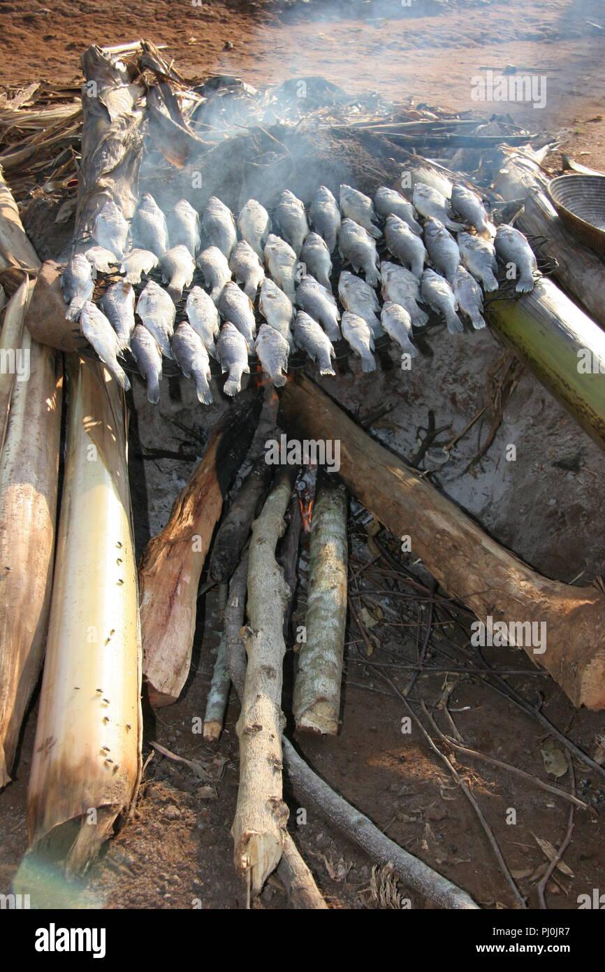 Nilo pesce persico viene indurito per essere fumato su un fuoco di legno nel distretto di Masaka, Uganda. Immagini Stock