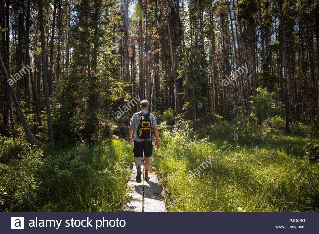 Uomo maturo backpacking, trekking nella foresta di sole Immagini Stock