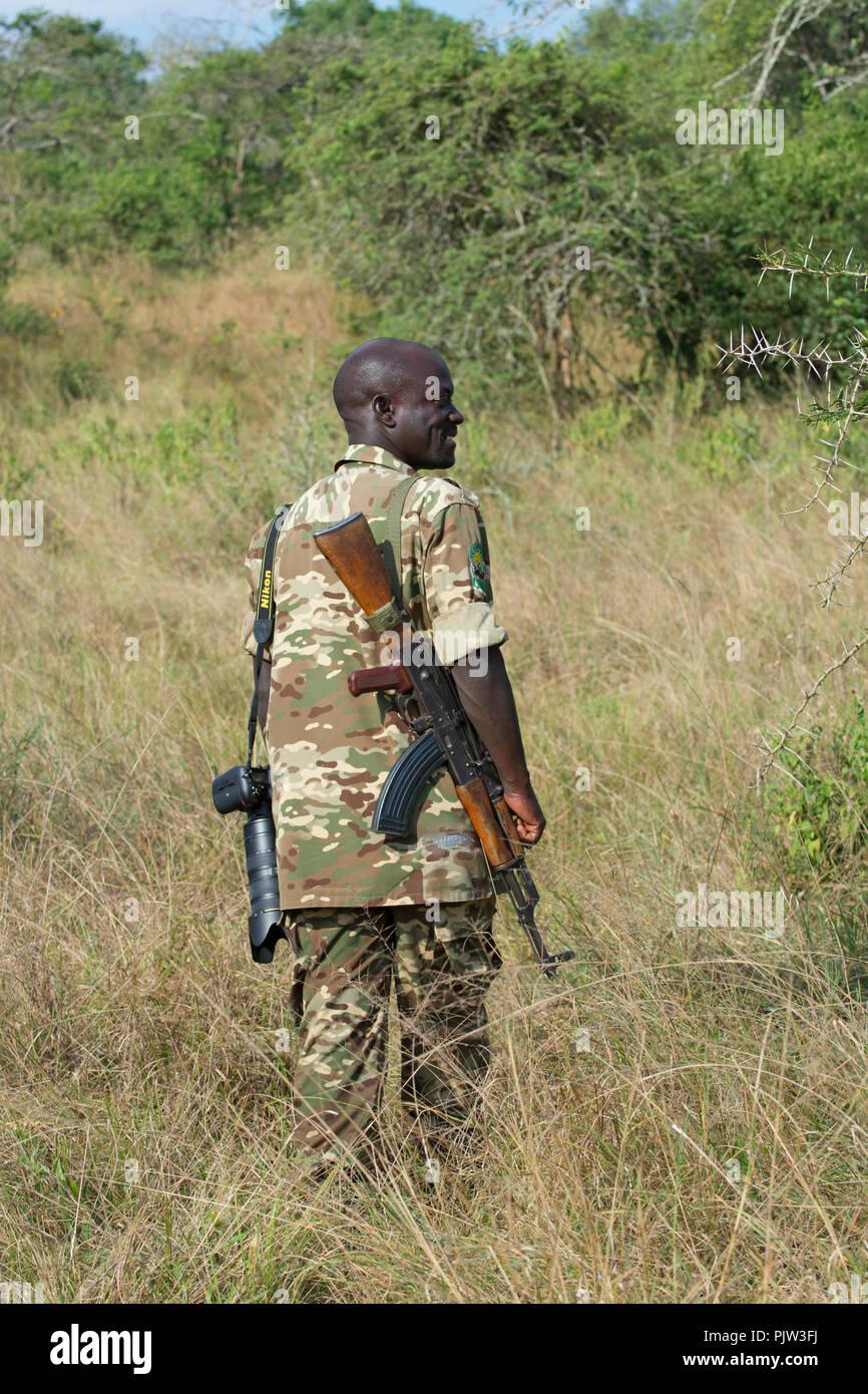 Gioco Ranger, Game Warden, Field Guide, Guida Safari con AK-42 Fucile, Lago Mburo National Park, Uganda Immagini Stock