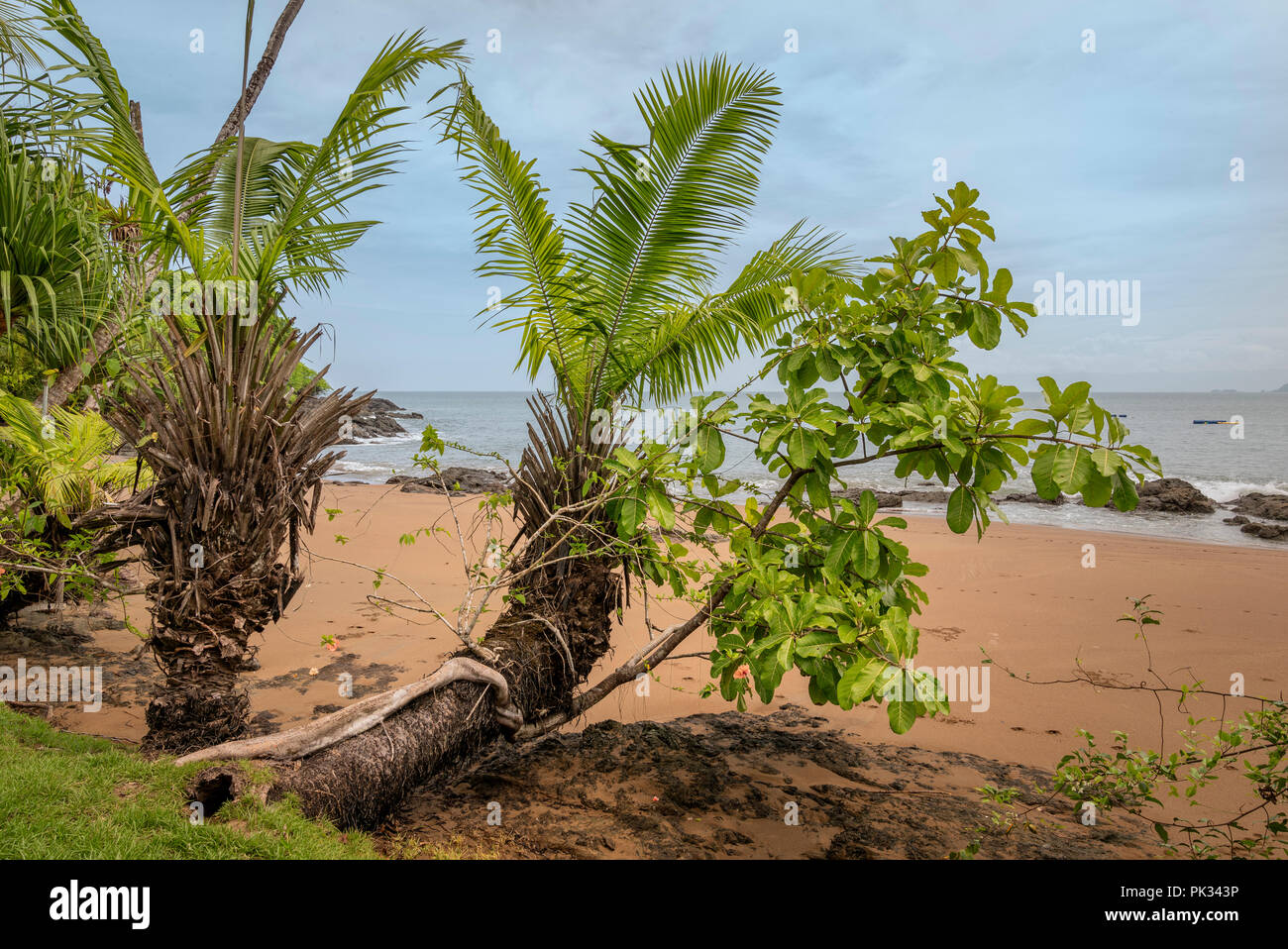 Spiaggia, Parco Nazionale di Corcovado, Osa Peninsula, Costa Rica Immagini Stock
