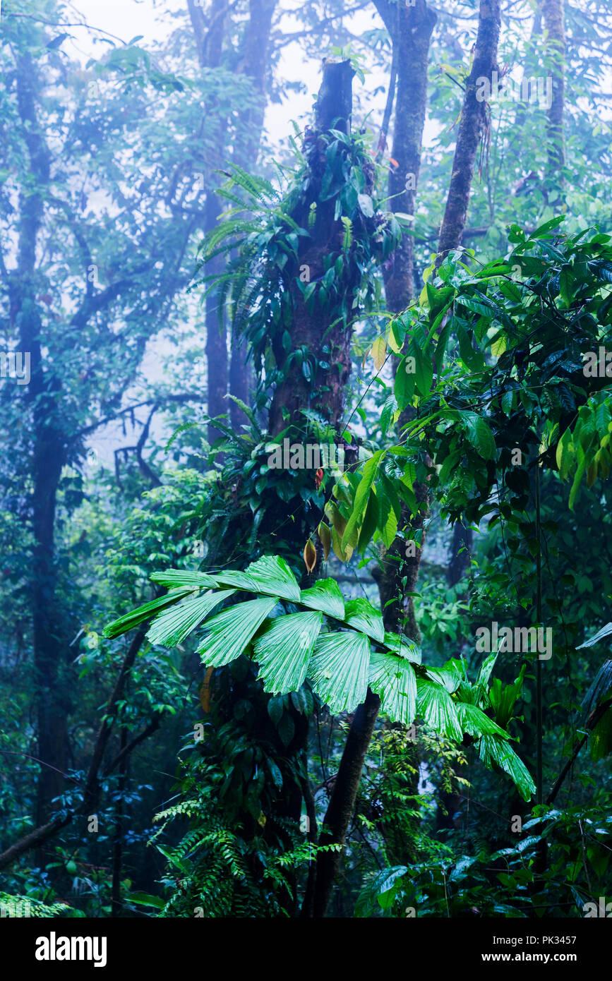 Alberi, foresta pluviale, Costa Rica Immagini Stock