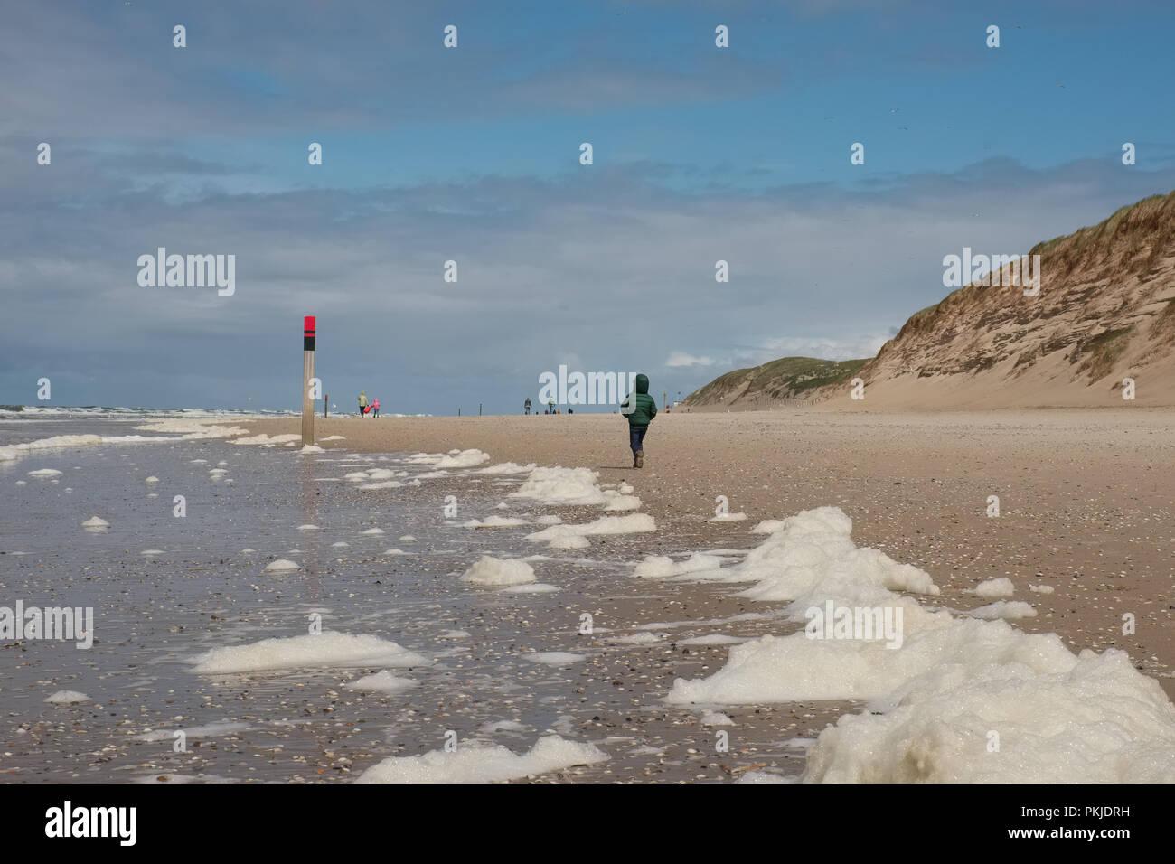 Le alghe (tipo Phaeocystis ) coprire una spiaggia di Texel, la più grande dell'Waddeneilanden. Foto Stock