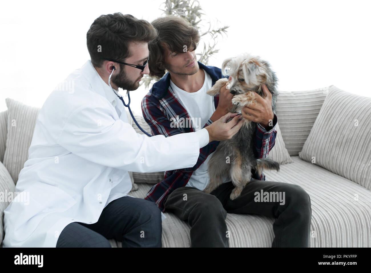 Proprietario amante con un Yorkshire terrier in ufficio di un veterinario Immagini Stock