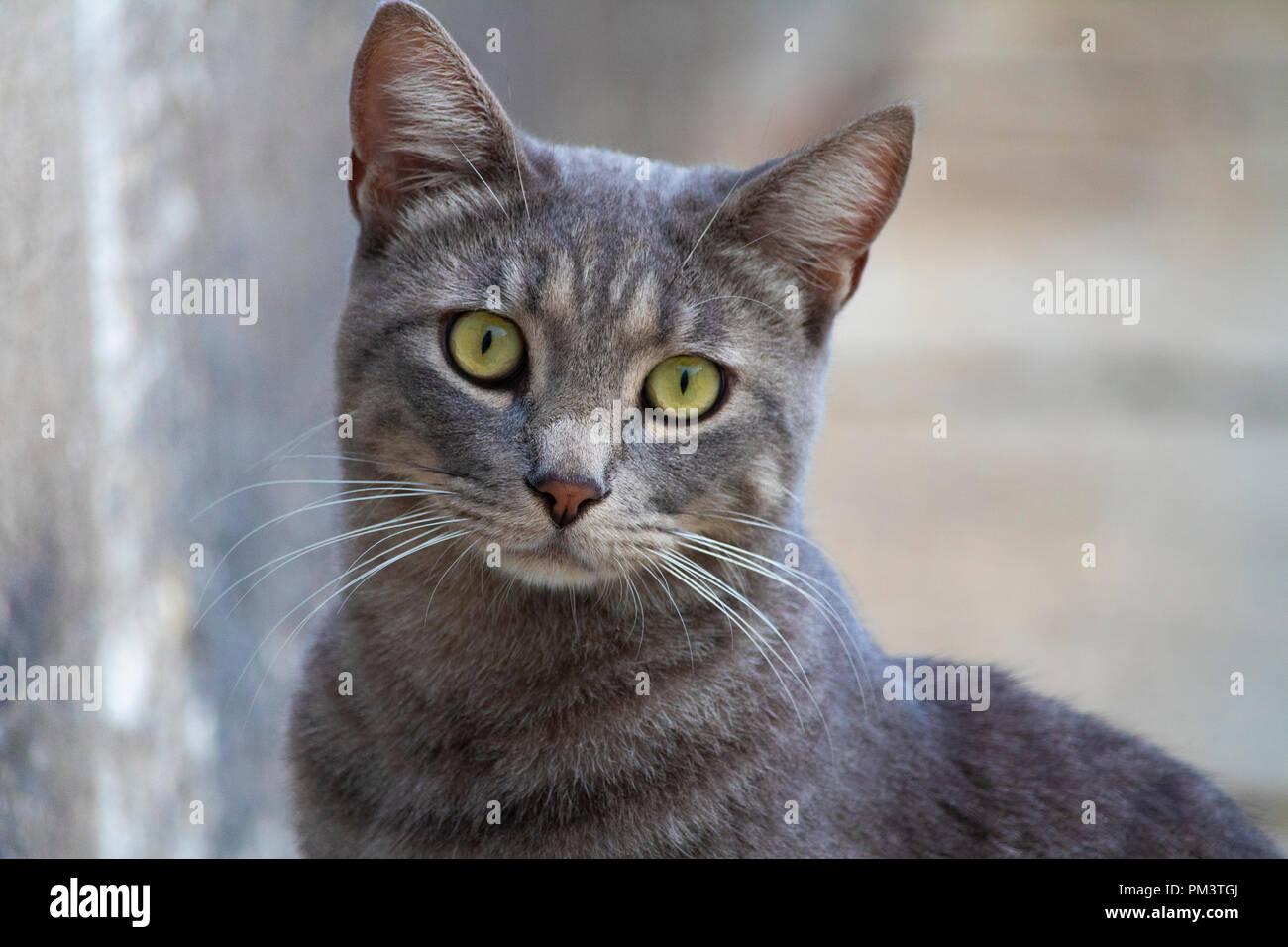 Awesome isolato simpatico gatto grigio ritratto su strada Foto Stock