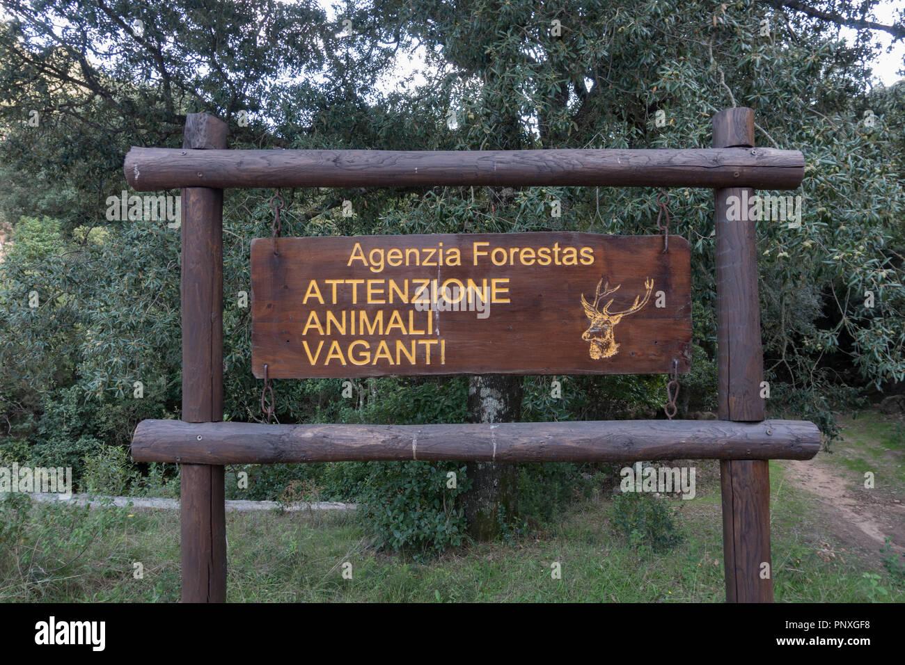 Scheda Informazioni. La Foresta Demaniale dei Sette Fratelli Provincia di Cagliari Immagini Stock