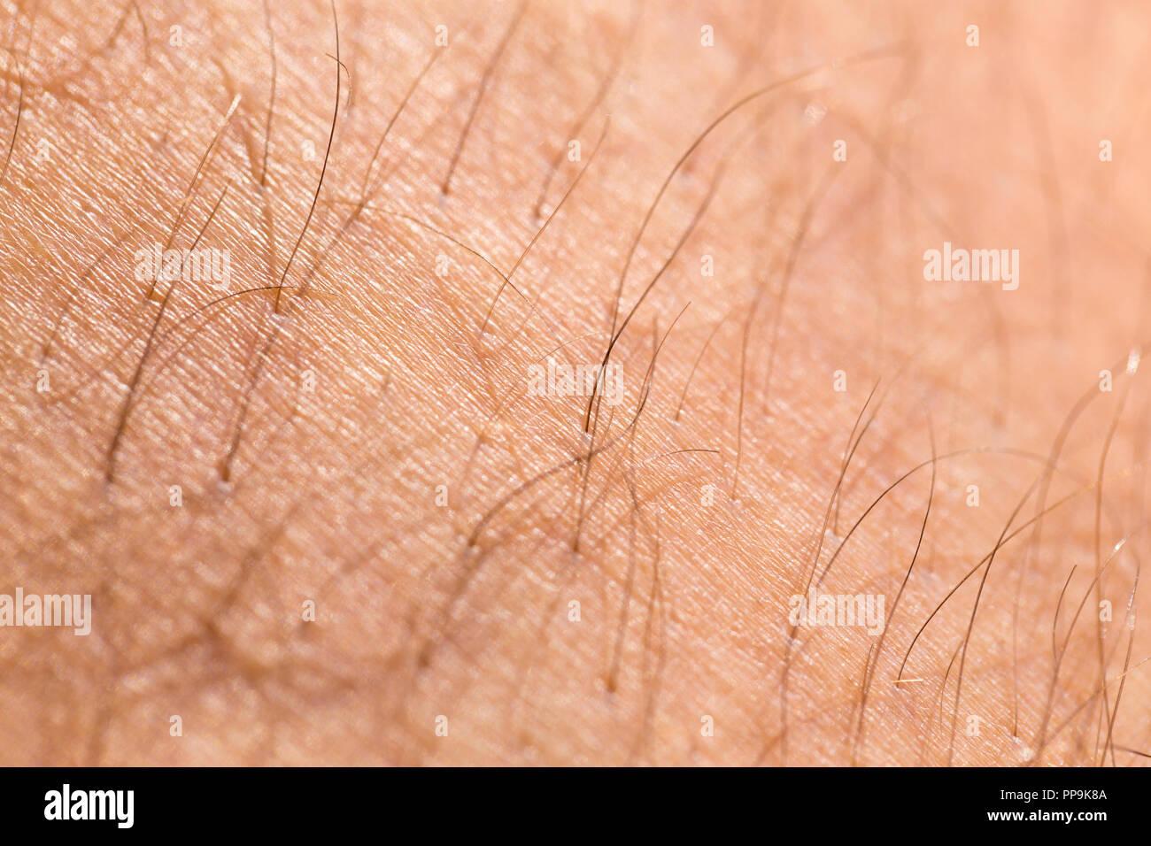 Dettaglio della pelle umana con i capelli, close-up Immagini Stock