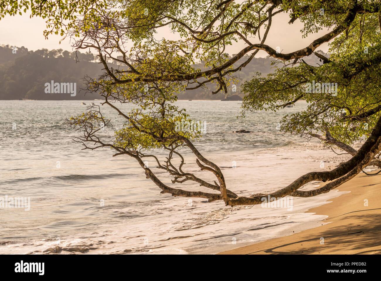 Spiaggia scene, Parco Nazionale di Corcovado, Osa Peninsula, Costa Rica Immagini Stock