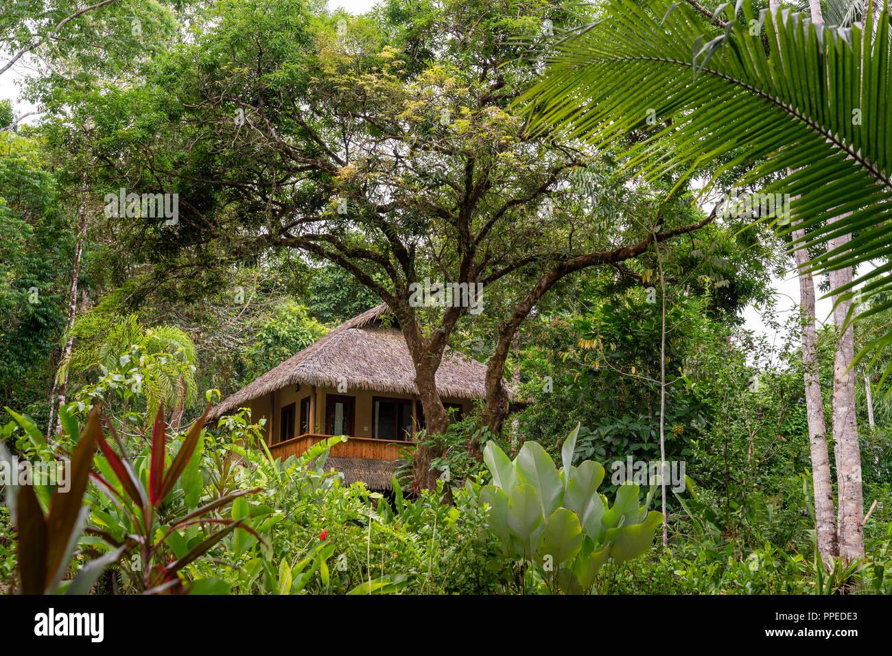La foresta pluviale, Parco Nazionale di Corcovado, Osa Peninsula, Costa Rica Immagini Stock