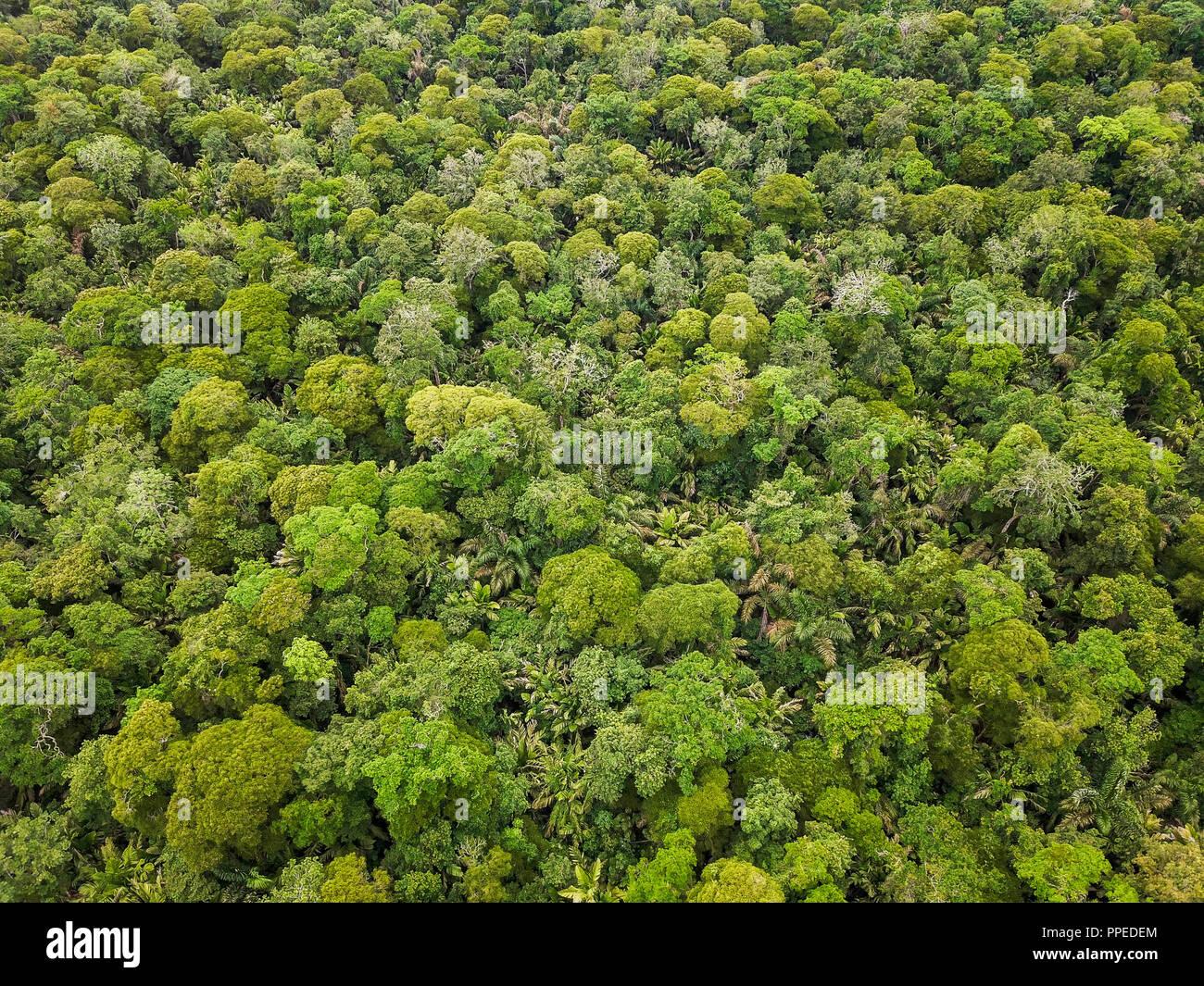 La foresta pluviale, Parco Nazionale di Tortuguero, Costa Rica Immagini Stock