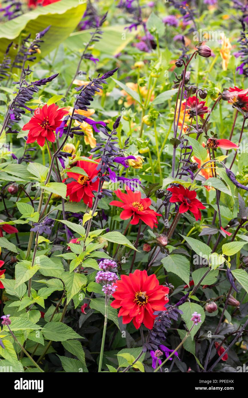 Close up di un misto di fiori colorati in border Foto Stock