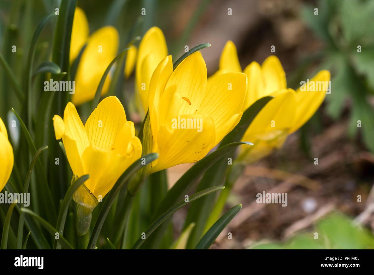 Fiori Di Stagione Settembre fiori gialli del tardo settembre blooming hardy lampadina