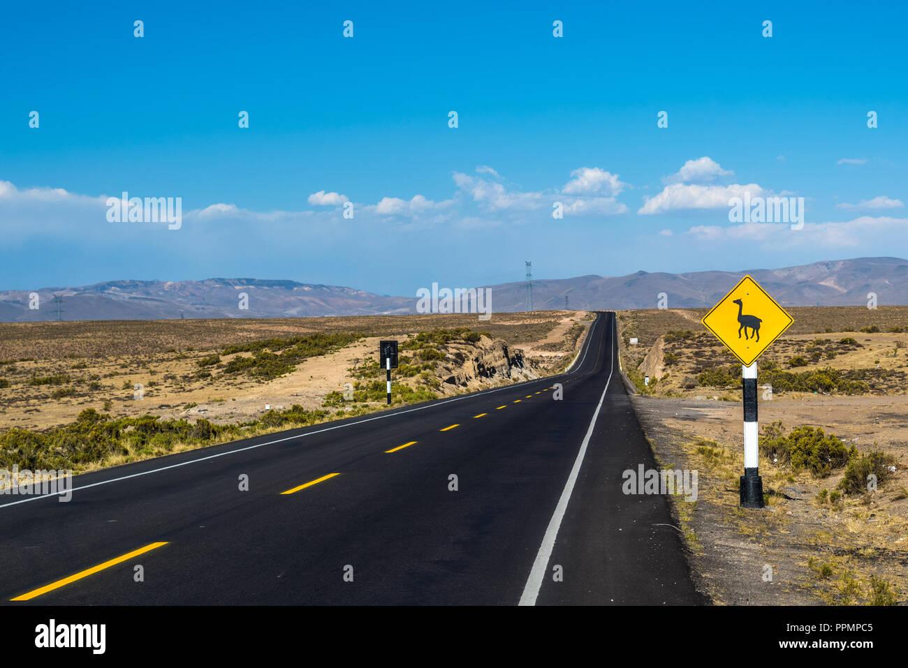 Llama attraversando cartello stradale in Perù, Sud America Immagini Stock