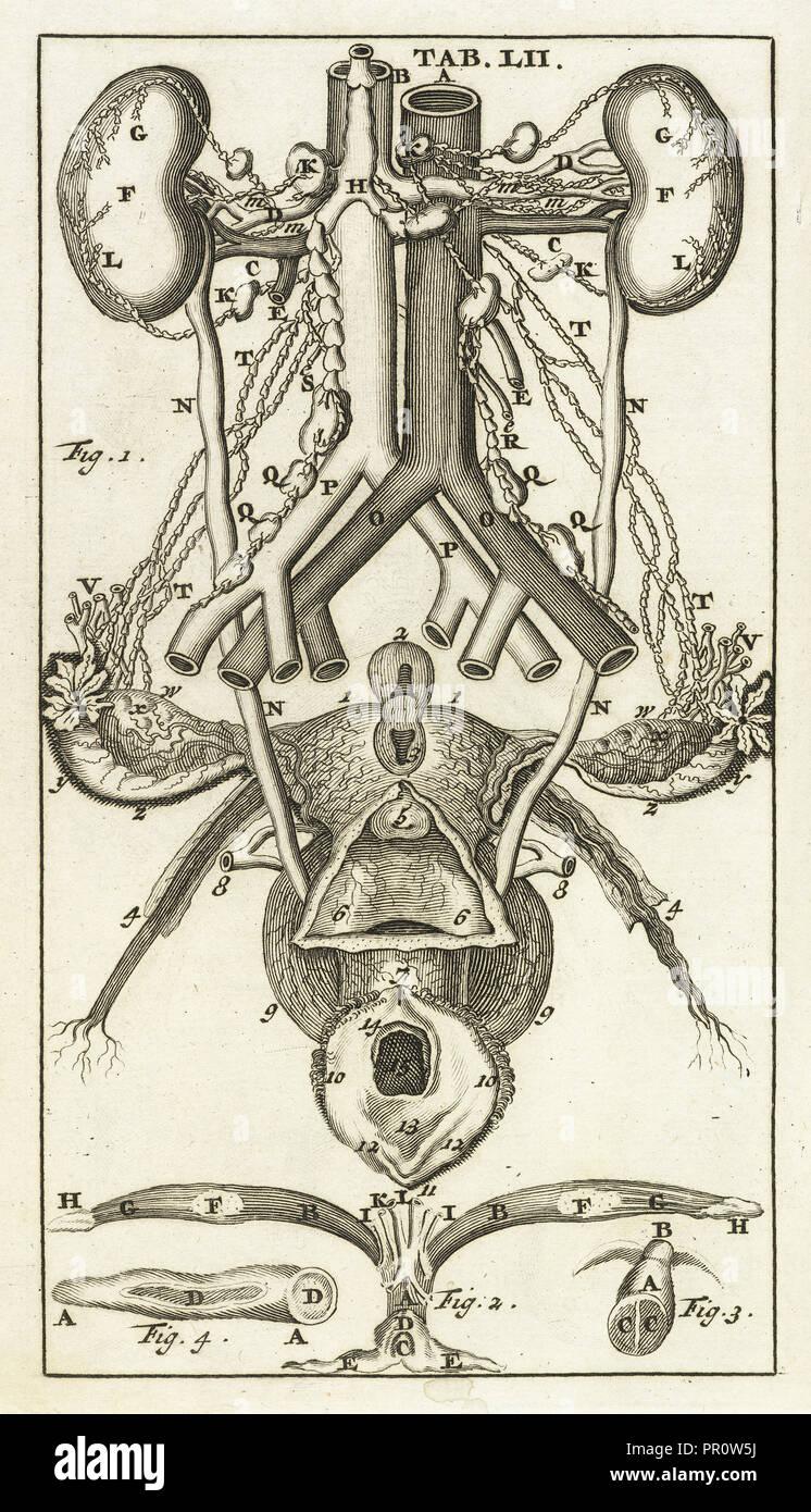 Scheda. LII, Steph. Blancardi Anatomia reformata, sive, Concinna corporis humani dissectio, ad mentem neotericorum adornata Immagini Stock