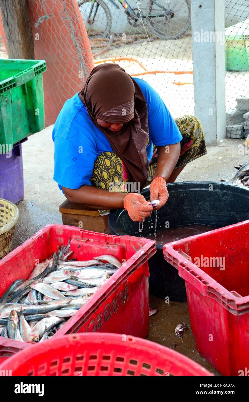 Thai donna musulmana in sarong e velo budella e pulisce il pesce Pattani Thailandia Immagini Stock