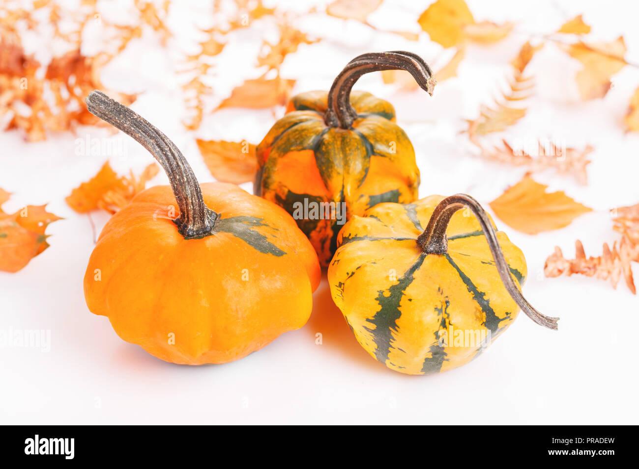 Zucca Halloween Essiccare.Composizione D Autunno Zucche Foglie Essiccate Su Sfondo Bianco
