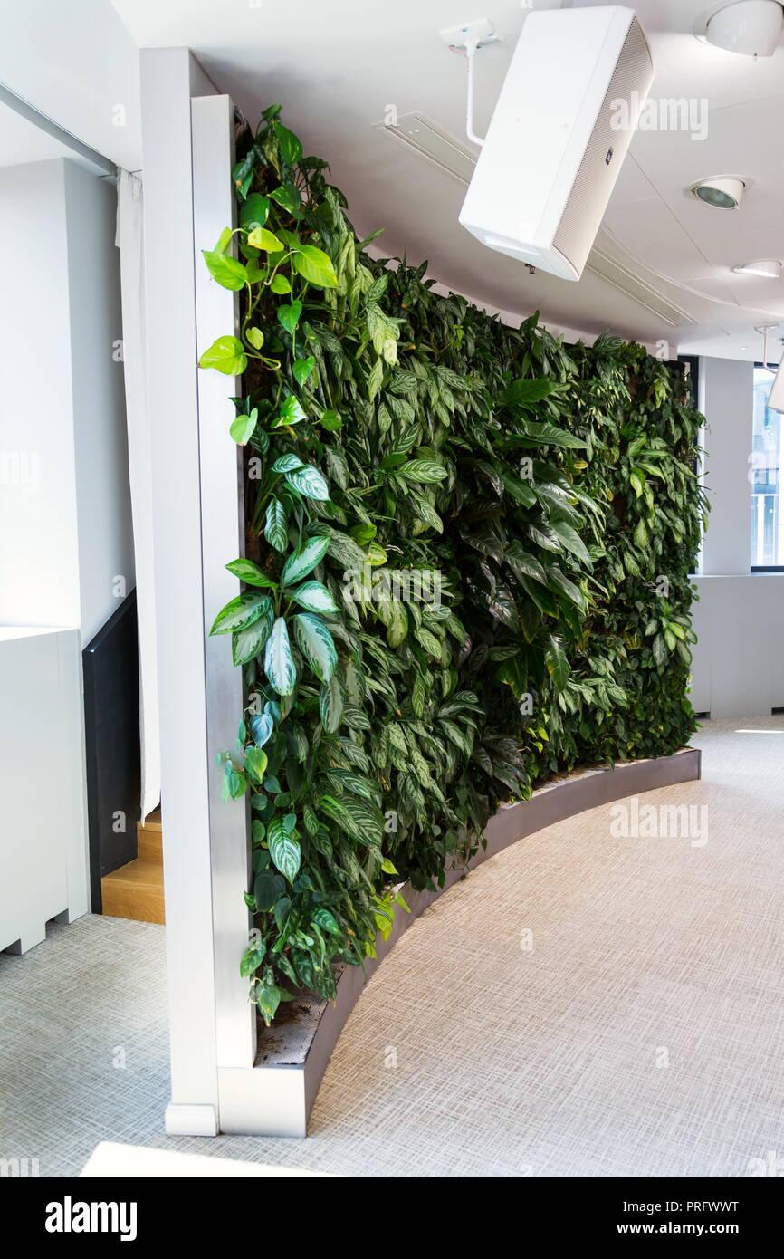 Soggiorno parete verde giardino verticale per interni con for Piante arredamento moderno