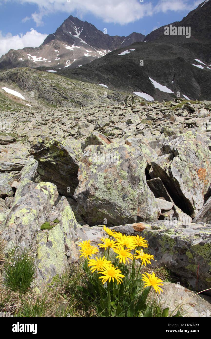 L'Italia, il Parco Nazionale dello Stelvio. Vicino al Passo Gavia nelle Alpi dell'Ortles. Paesaggio alpino. Sullo sfondo: Corno dei Tre Signori picco, 3360m alta. Foto Stock