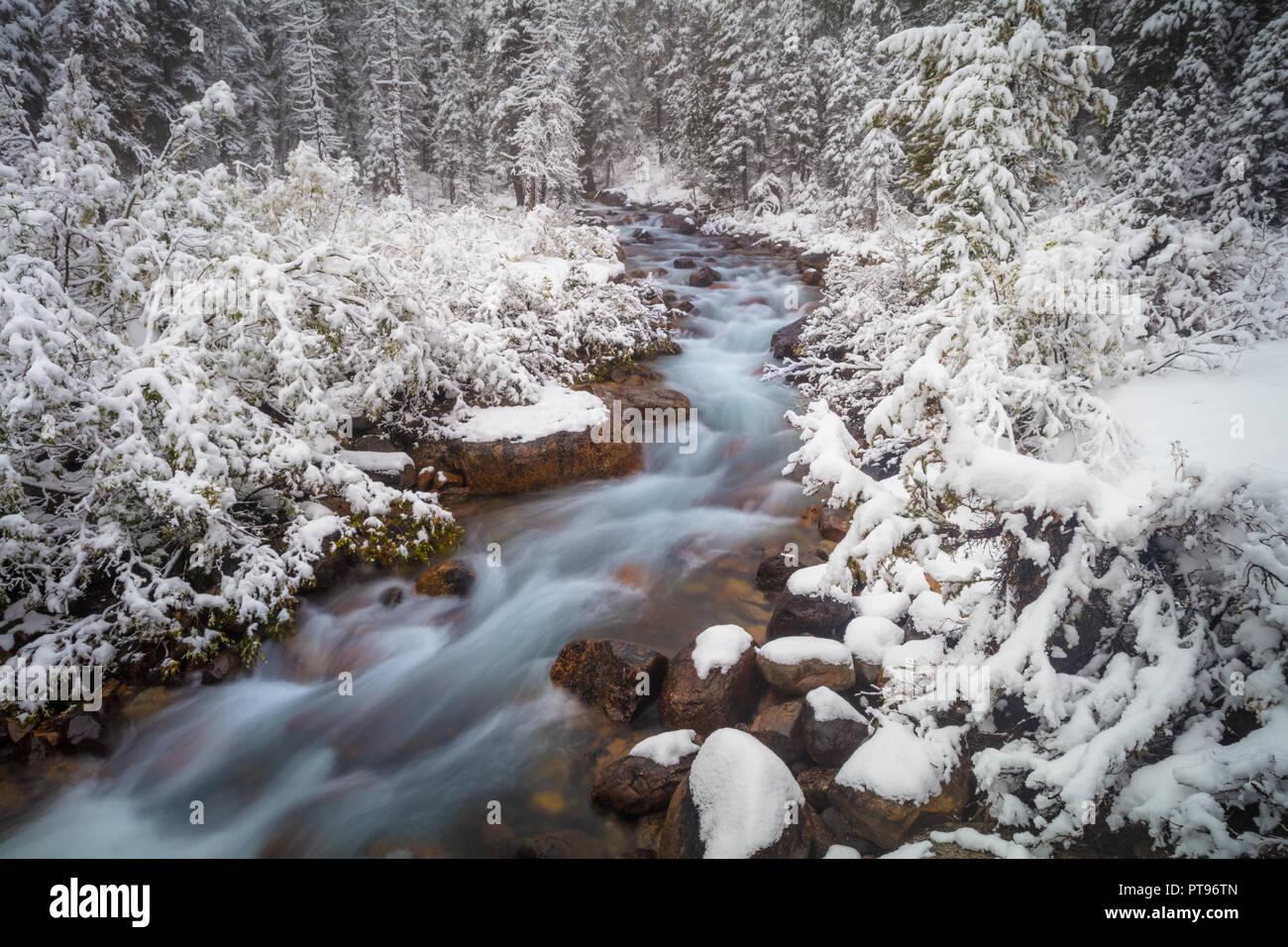 Creek e vicino al Lago Moraine nel Parco Nazionale di Banff. Il Parco Nazionale di Banff è il Canada il più antico parco nazionale ed è stato istituito nel 1885. Situato nel Rocky Immagini Stock