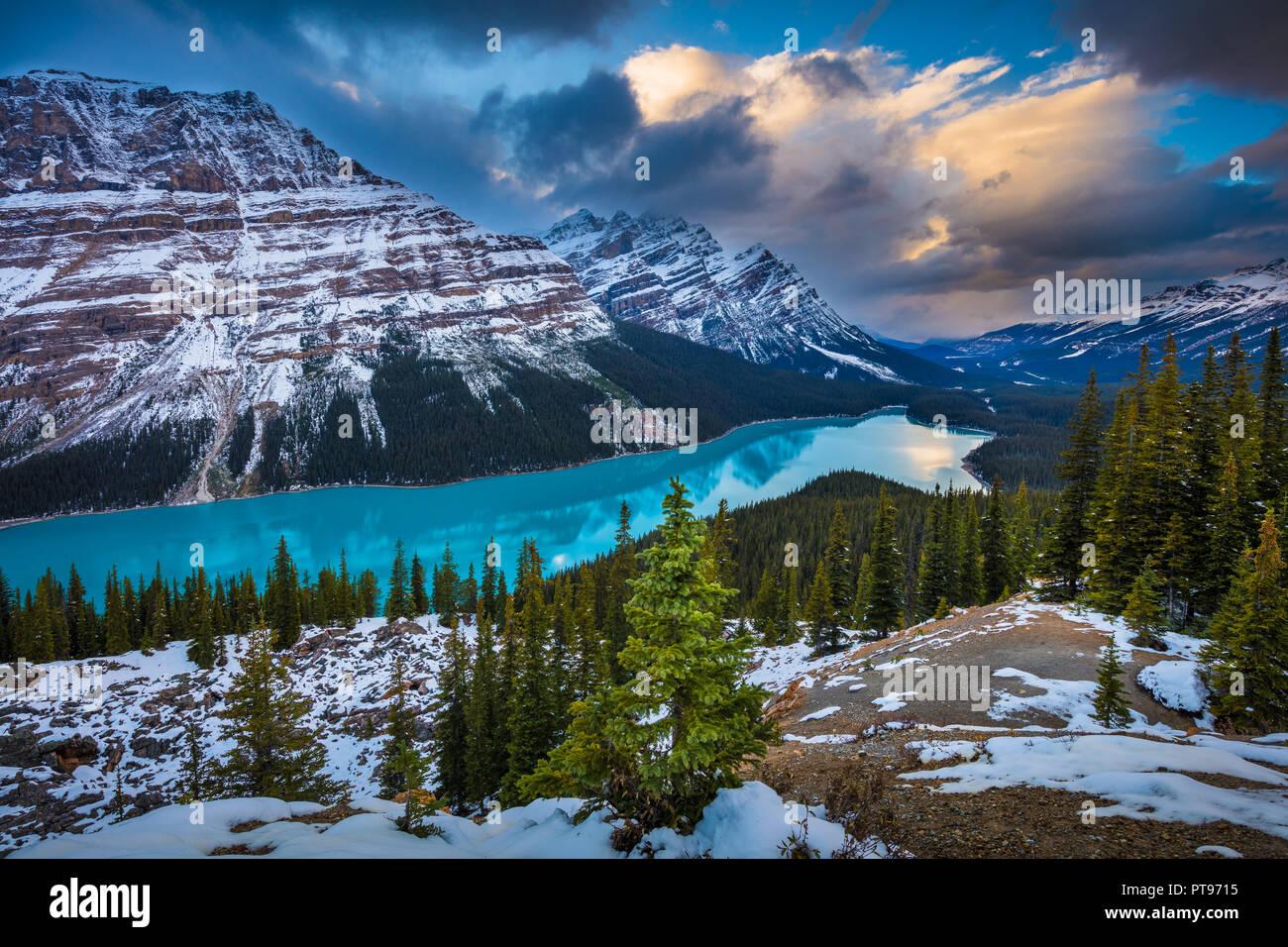 Il Lago Peyto è un ghiacciaio-lago alimentato nel Parco Nazionale di Banff nelle Montagne Rocciose Canadesi. Il lago stesso è facilmente accessibile dall'Icefields Parkway. Immagini Stock