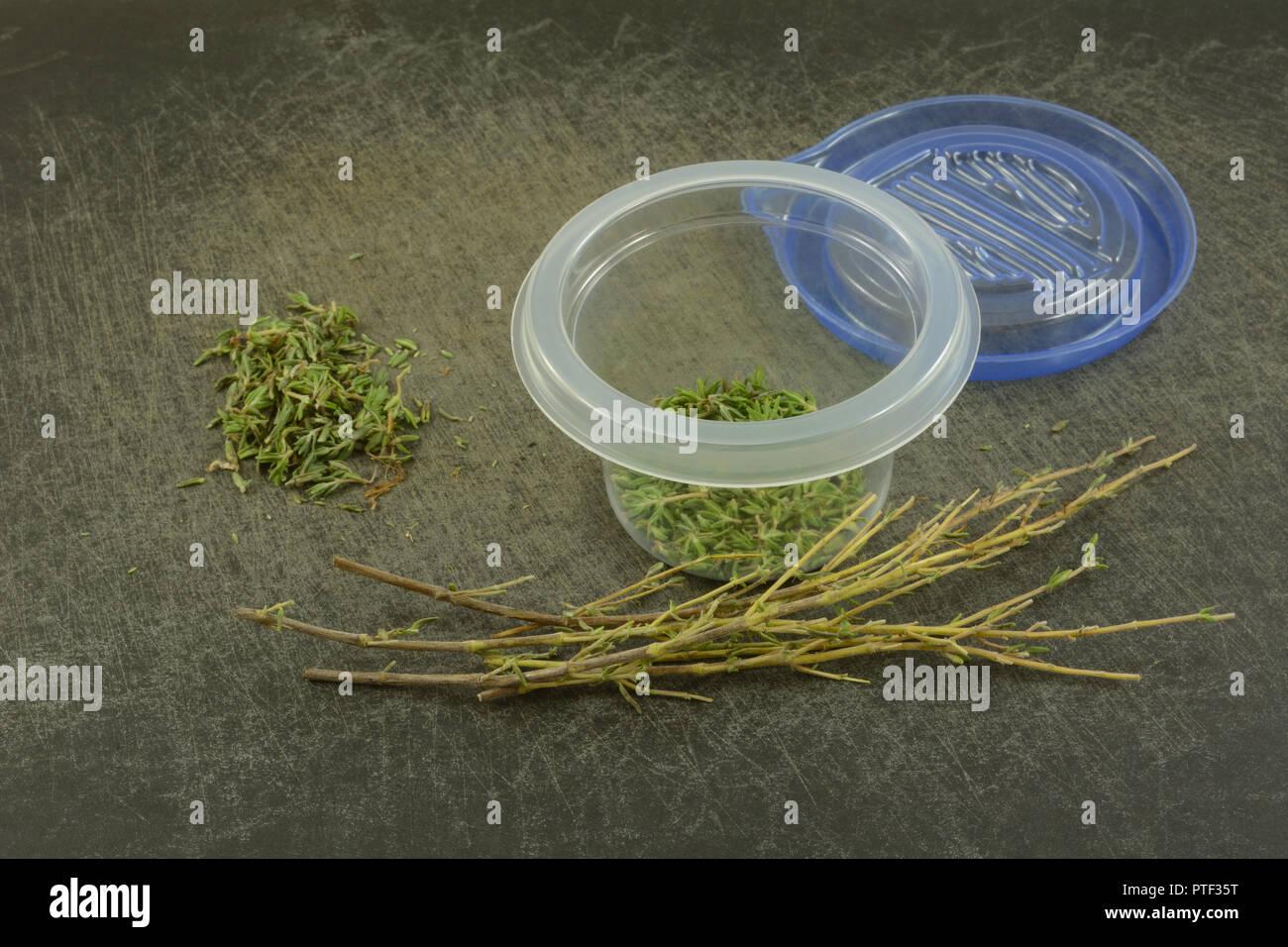 Lo strippaggio di timo fresco foglie da rami per mettere in piccolo contenitore in plastica sul bordo di taglio per uso in cucina più tardi Immagini Stock