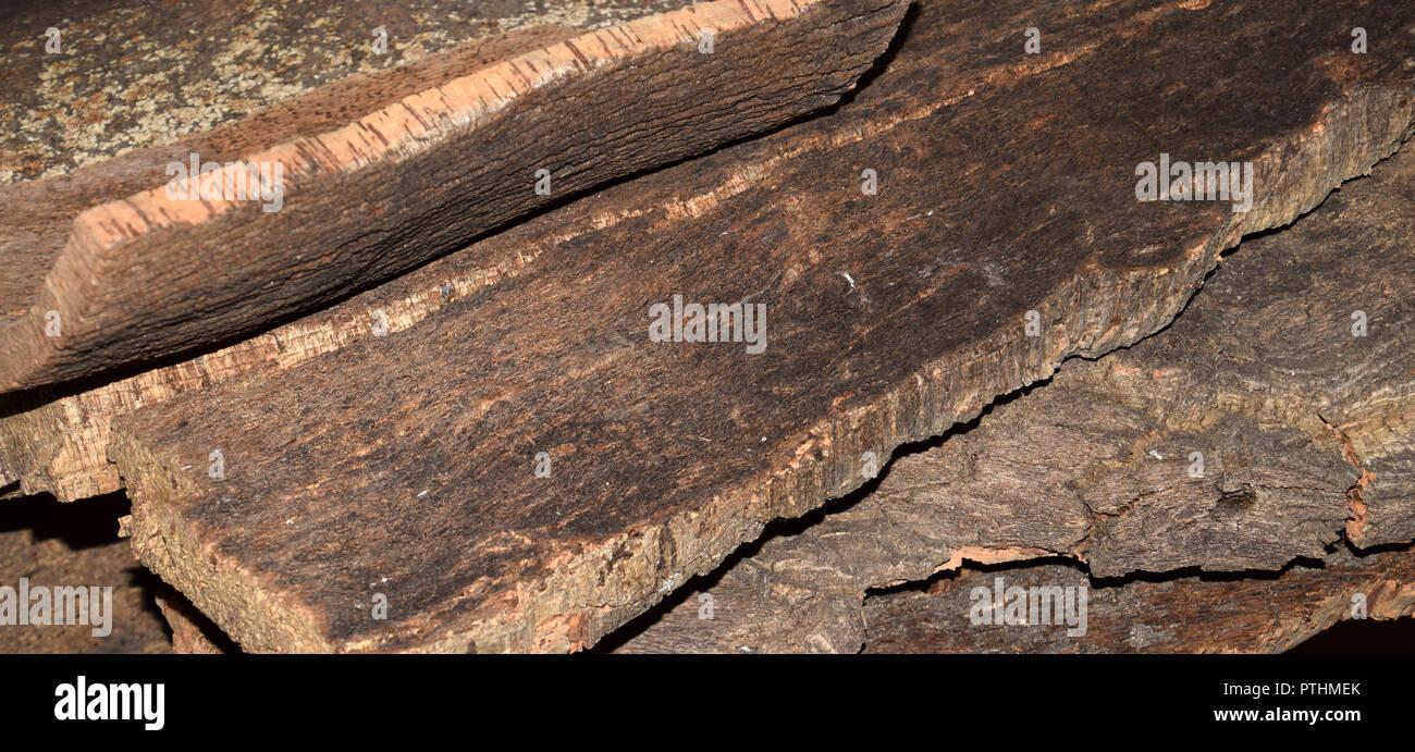 Querce da Sughero corteccia vista laterale, pelati plance di sughero da Quercus suber tree si asciuga per la successiva elaborazione Immagini Stock