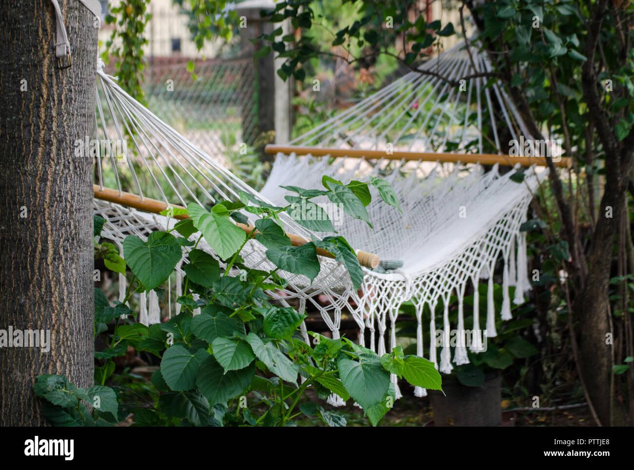 Amaca in giardino coperto con foglie verdi in Europa Foto Stock