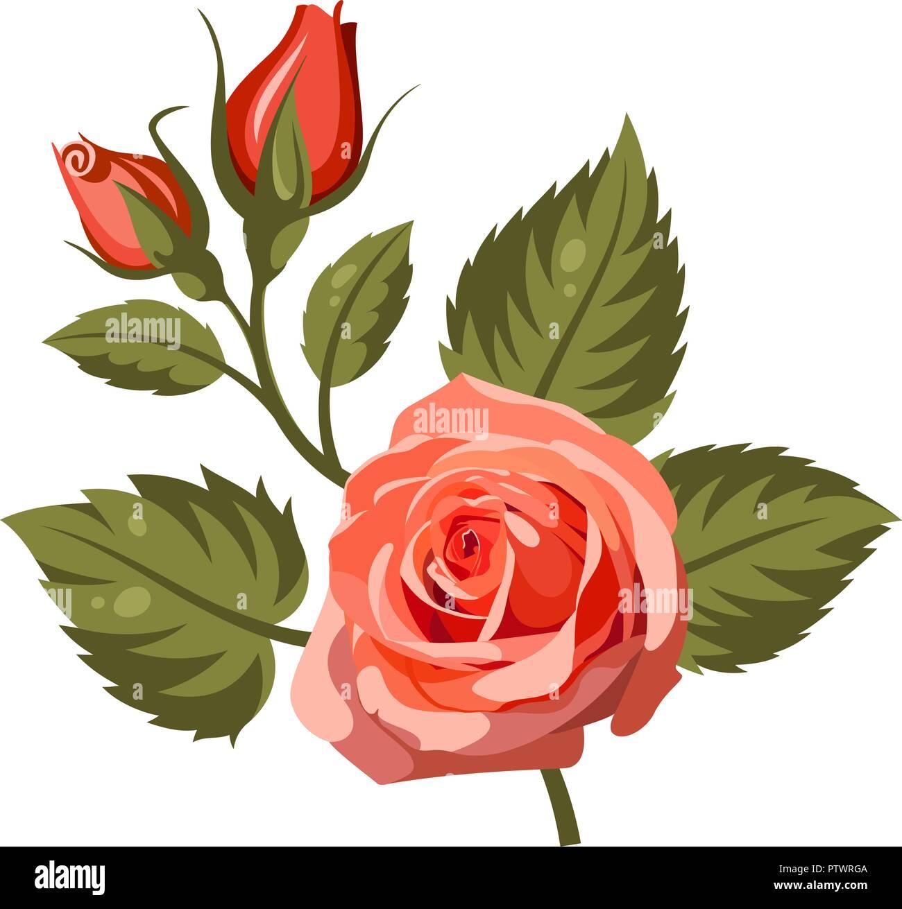Illustrazione Vettoriale Di Rose Rosse Isolato Su Sfondo Bianco
