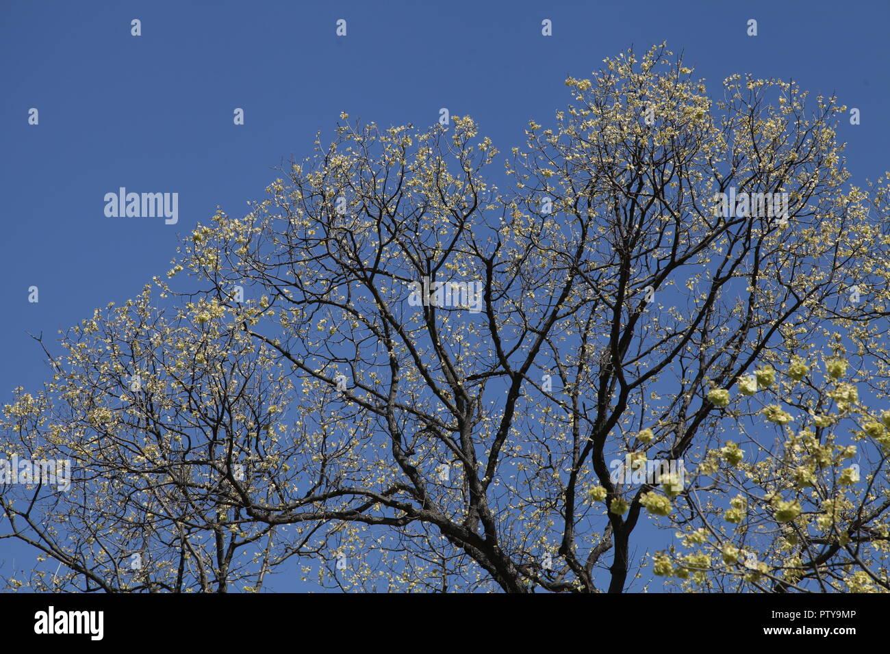 Tree primavera fiorisce Immagini Stock