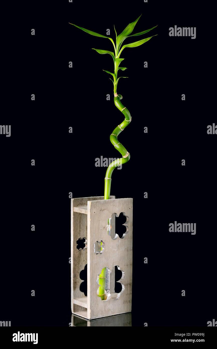 Concetto di ecologia immagine con levetta di bambù in vaso di legno su sfondo nero Immagini Stock