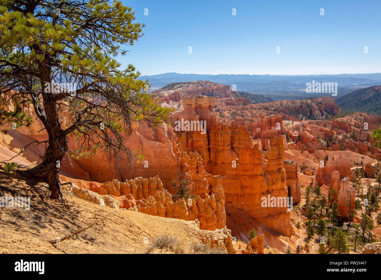 Parco Nazionale di Bryce Canyon dello Utah Foto Stock