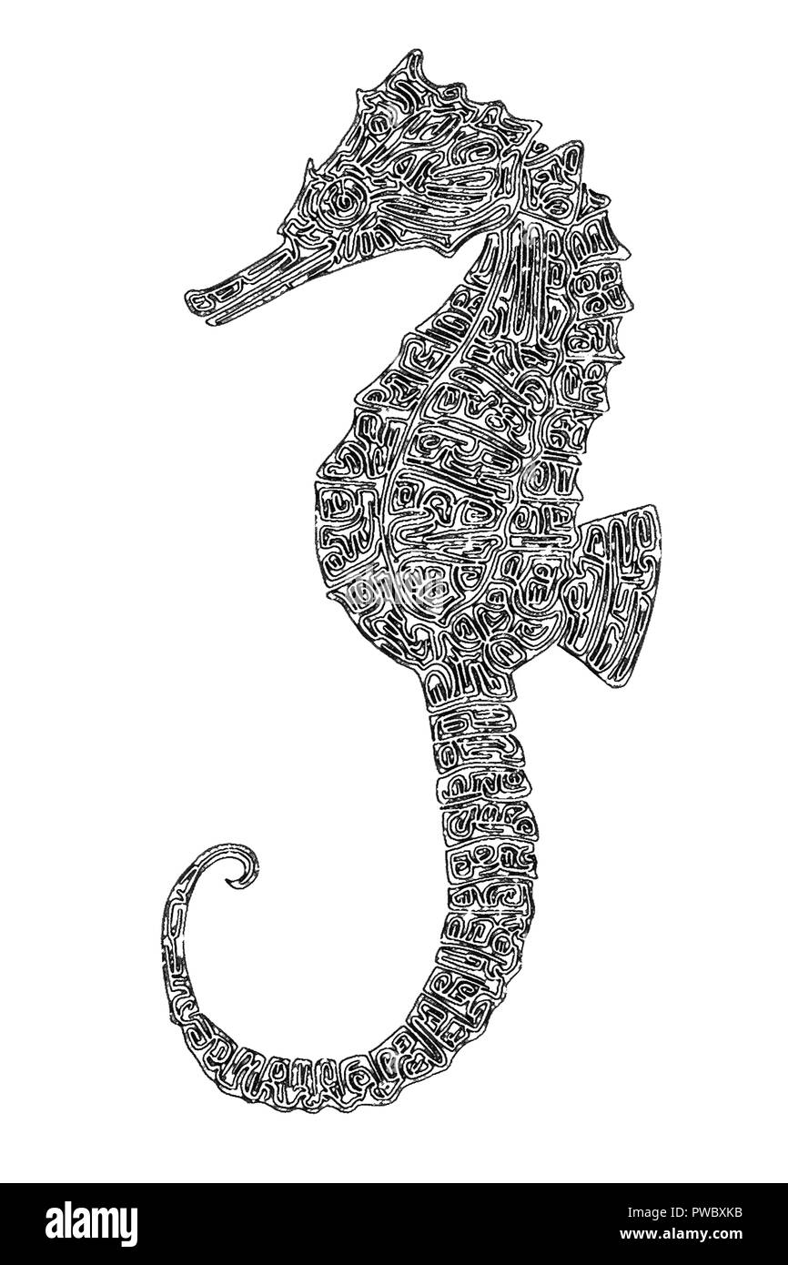 Illustrazione Di Un Cavalluccio Marino Bianco E Nero Disegno