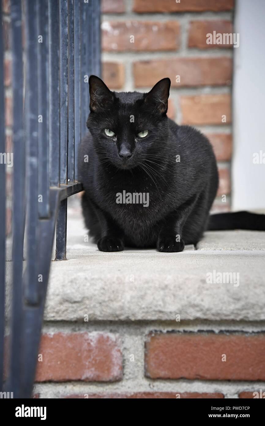 Pet Cuscino Cuccia Animali Domestici Cani Gatti Mici King 90x60x10 cm Taglia L, Taihang Acciaio Inossidabile 316 7 8  - 1  Tubo per Canna da Pesca.