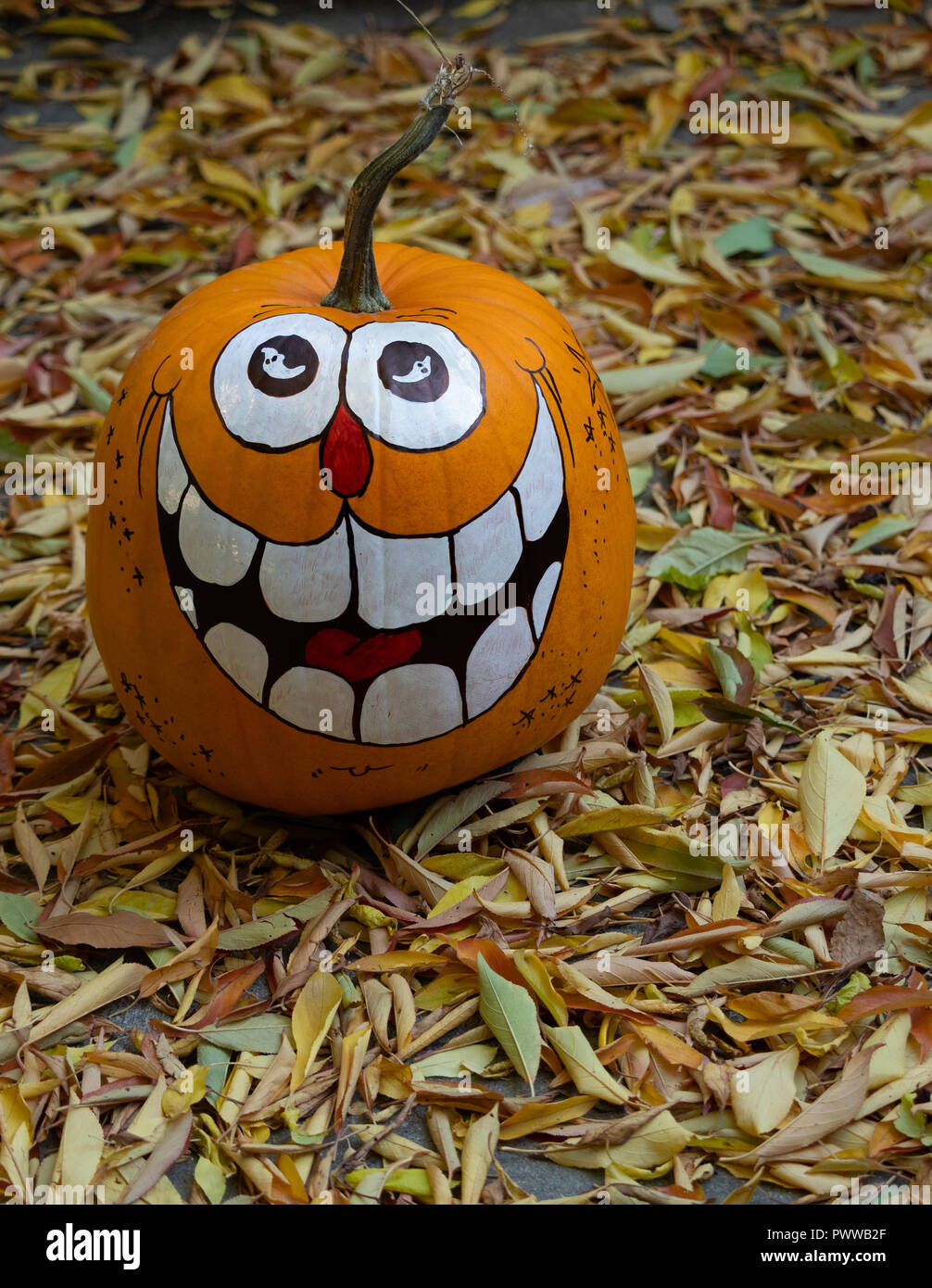 Zucca Halloween Essiccare.Dried Gourds Immagini Dried Gourds Fotos Stock Alamy