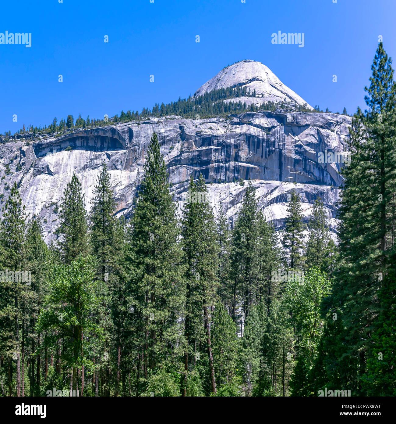 Montagna bianca e torreggianti alberi in Yosemite CA Immagini Stock