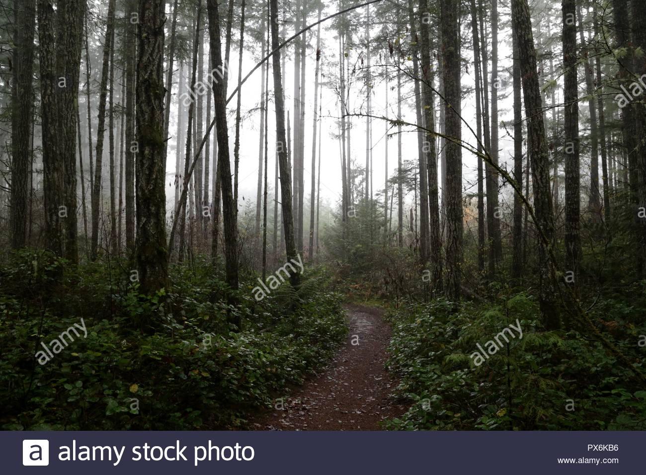 Ambiente Bosco nebbioso. Immagini Stock
