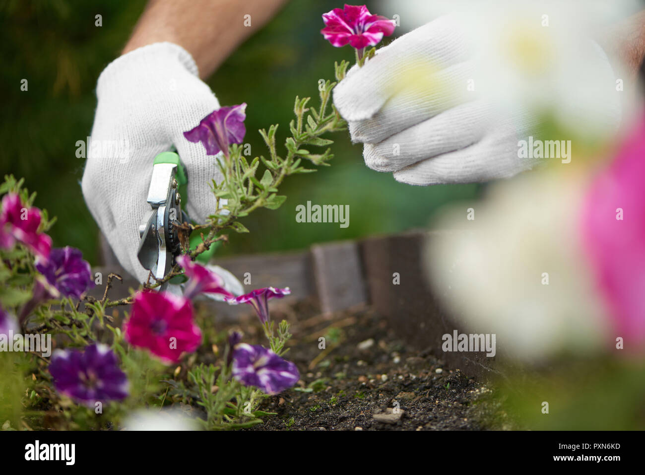 Coltivare Fiori Da Recidere chiusura del lavoratore di sesso maschile mani fiori da