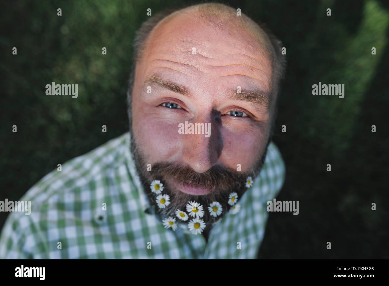 Ritratto di uomo maturo con margherite nella sua barba Immagini Stock