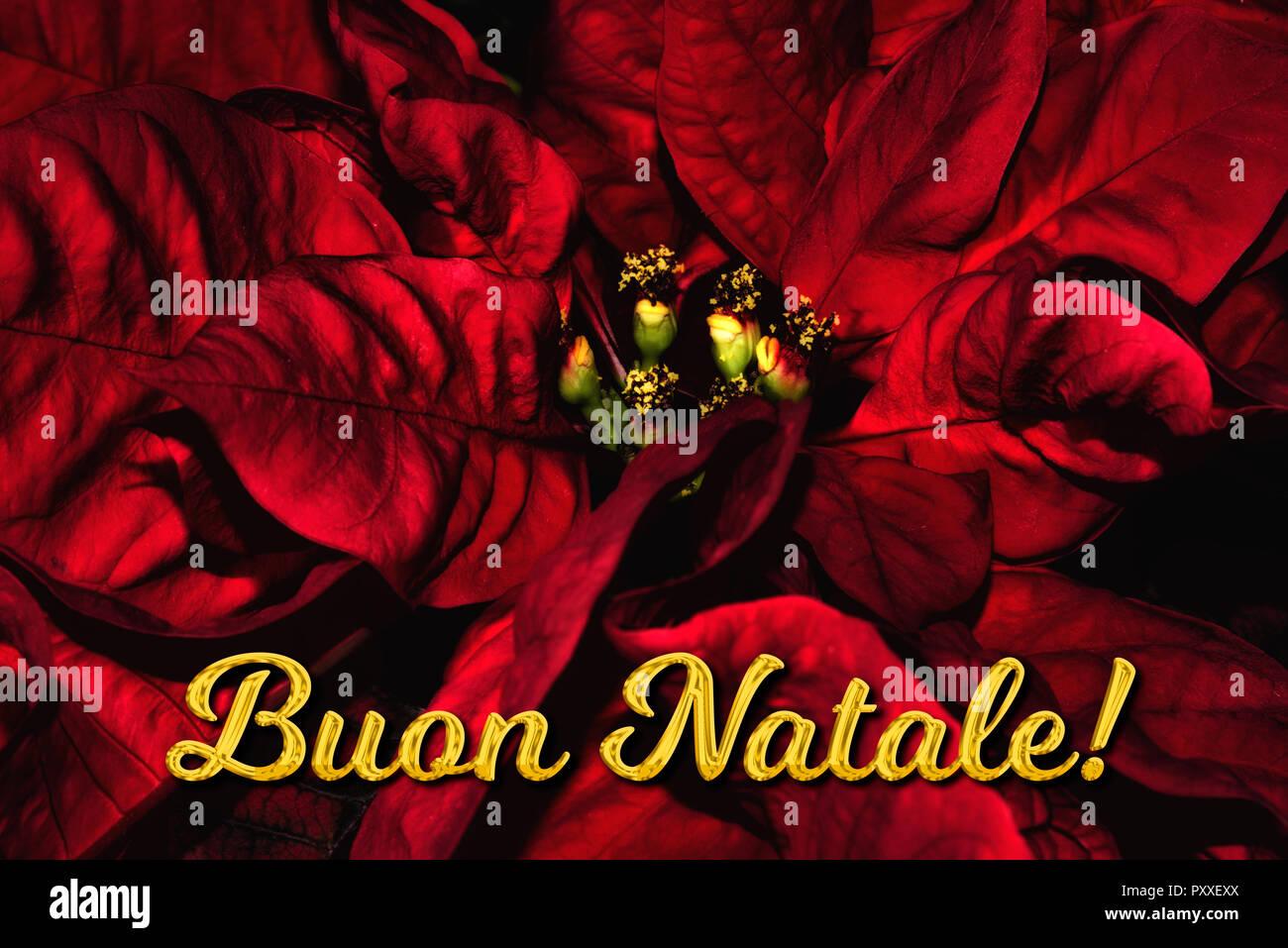 Buon Natale Que Significa.Testo In Italiano Buon Natale Significa Buon Natale Che Si