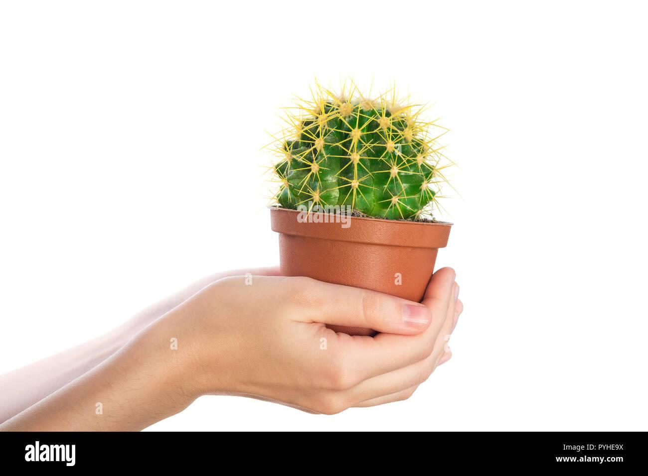 Hand Hold Cactus Immagini Hand Hold Cactus Fotos Stock Alamy