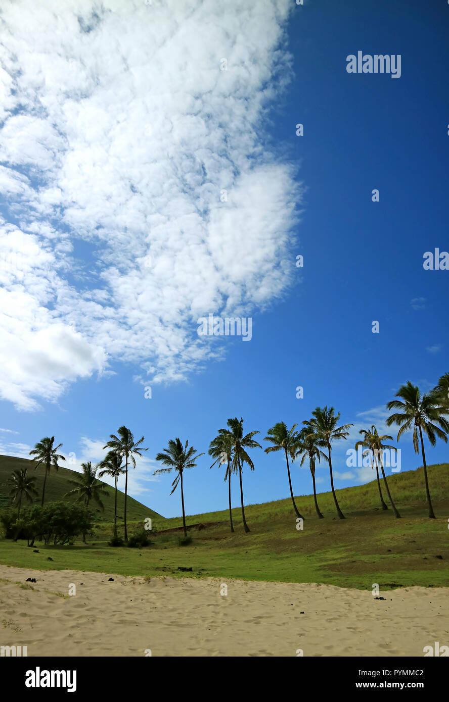 Fila Di Palme Di Cocco Contro Vivid Cielo Blu E Bianco Puro E Nuvole
