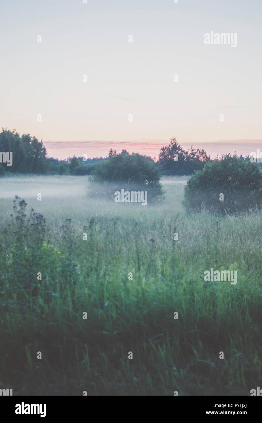 Nebbia bianco stabilisce oltre il campo d'erba. Romantica serata estiva scena. Immagini Stock