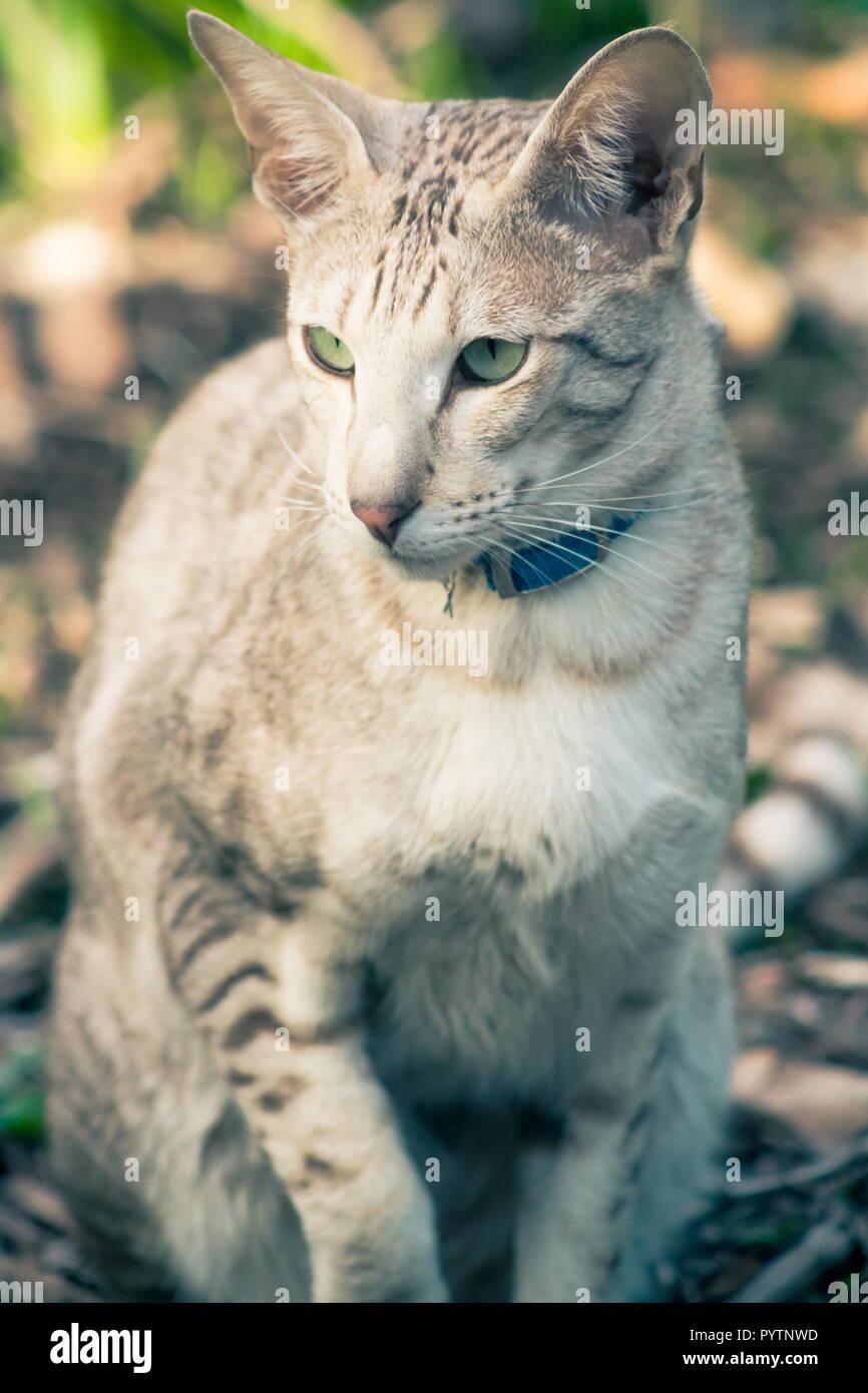 Close up immagine ritratto di un gatto domestico frame completo Immagini Stock