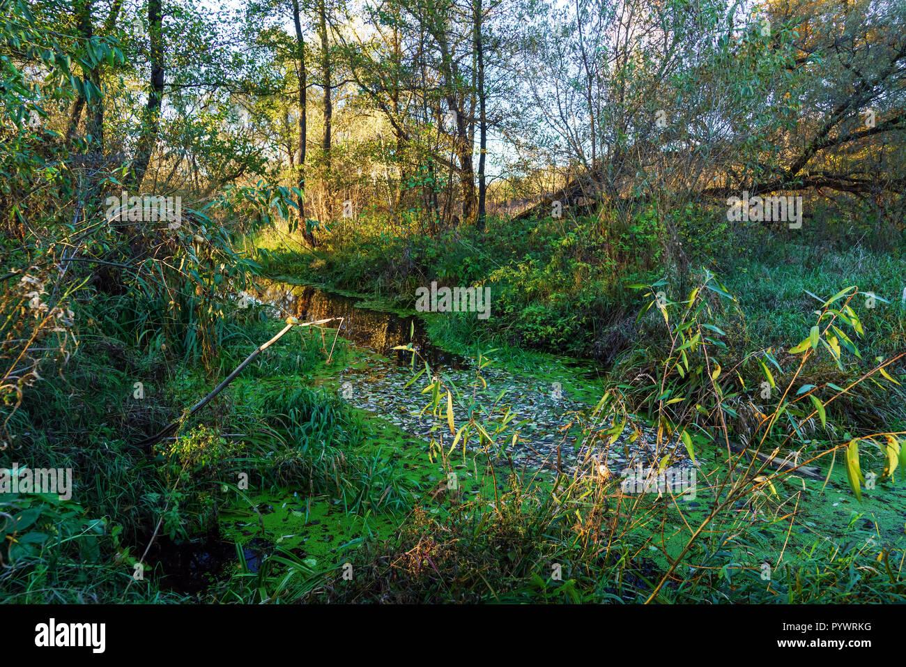 Fiume nella foresta in tarda estate o inizio autunno con molte piante e alberi Foto Stock