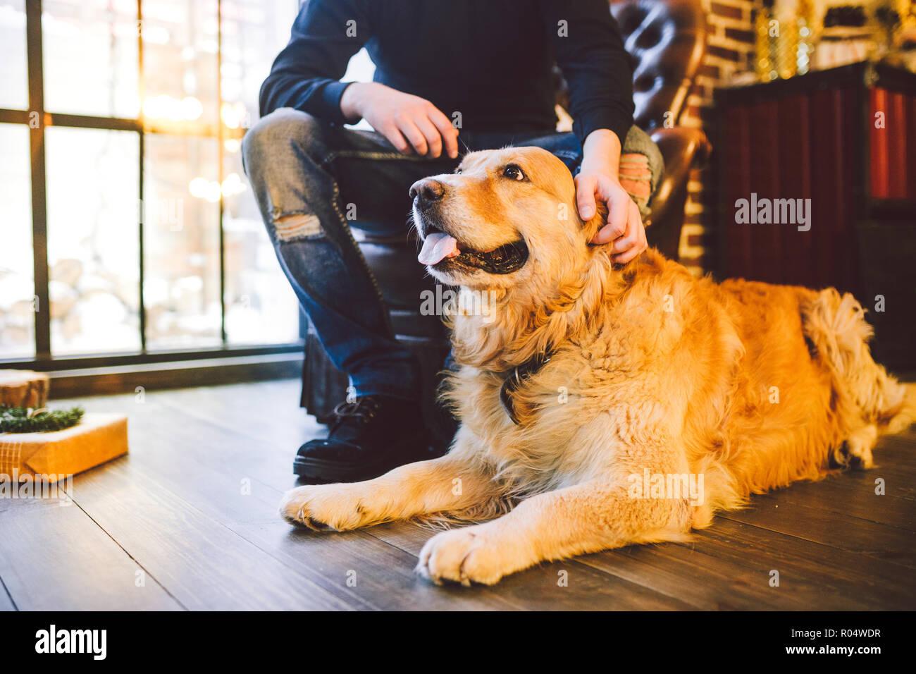 Abrador Immagini Abrador Fotos Stock Alamy