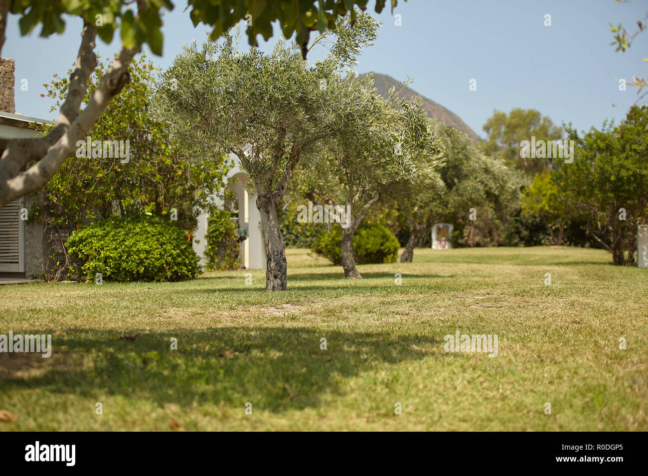 Giardino Mediterraneo Con Alcuni Alberi Di Olivo All Interno