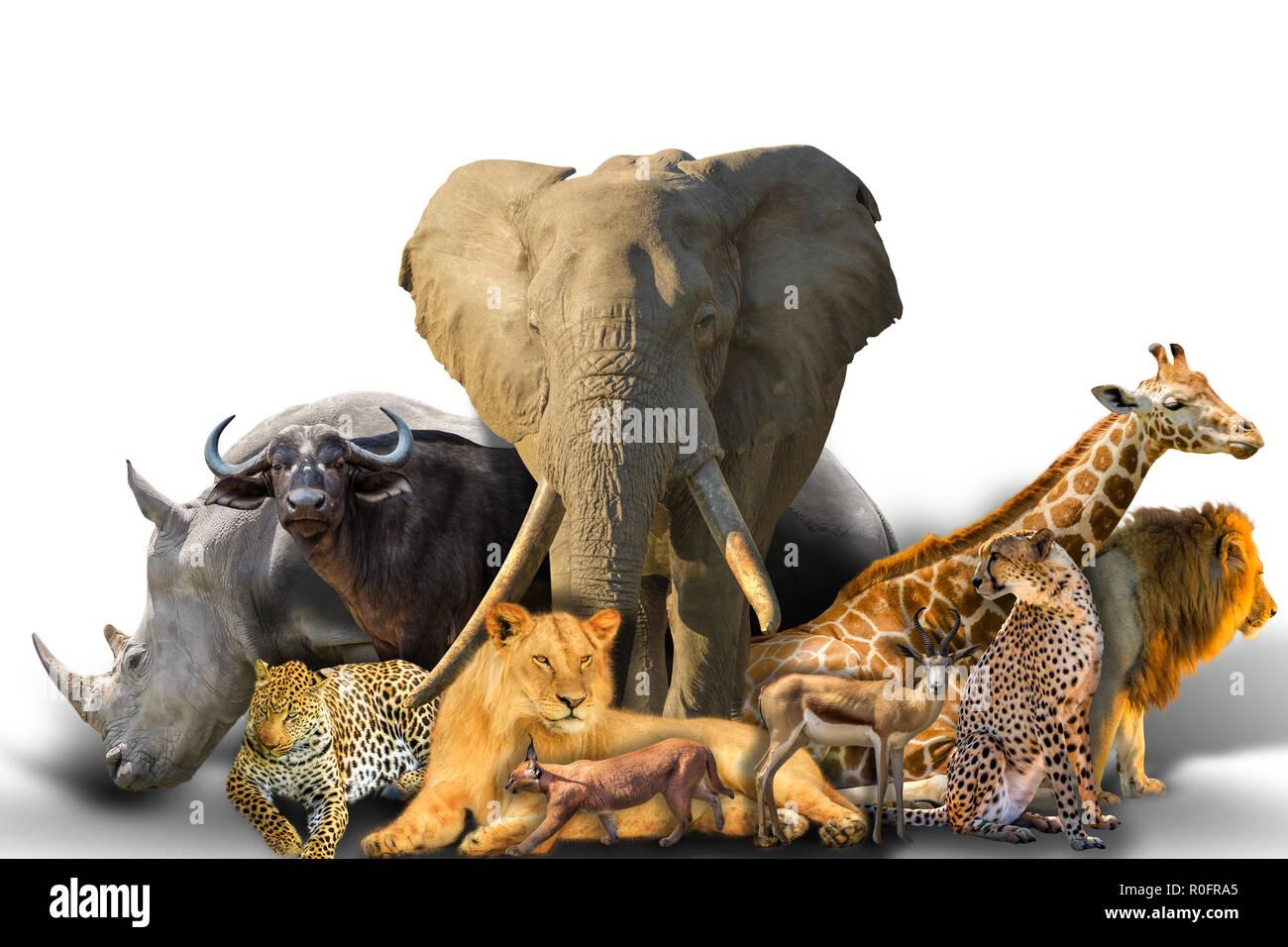 Grandi africani