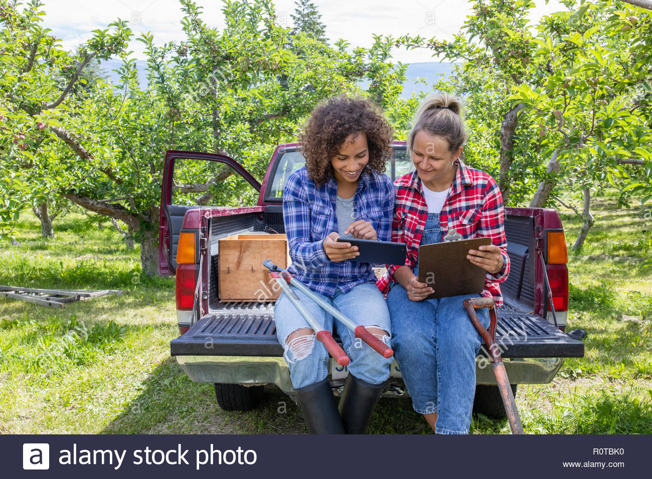 Gli agricoltori femmina con tavoletta digitale e appunti seduto sul retro del carrello in Orchard Immagini Stock