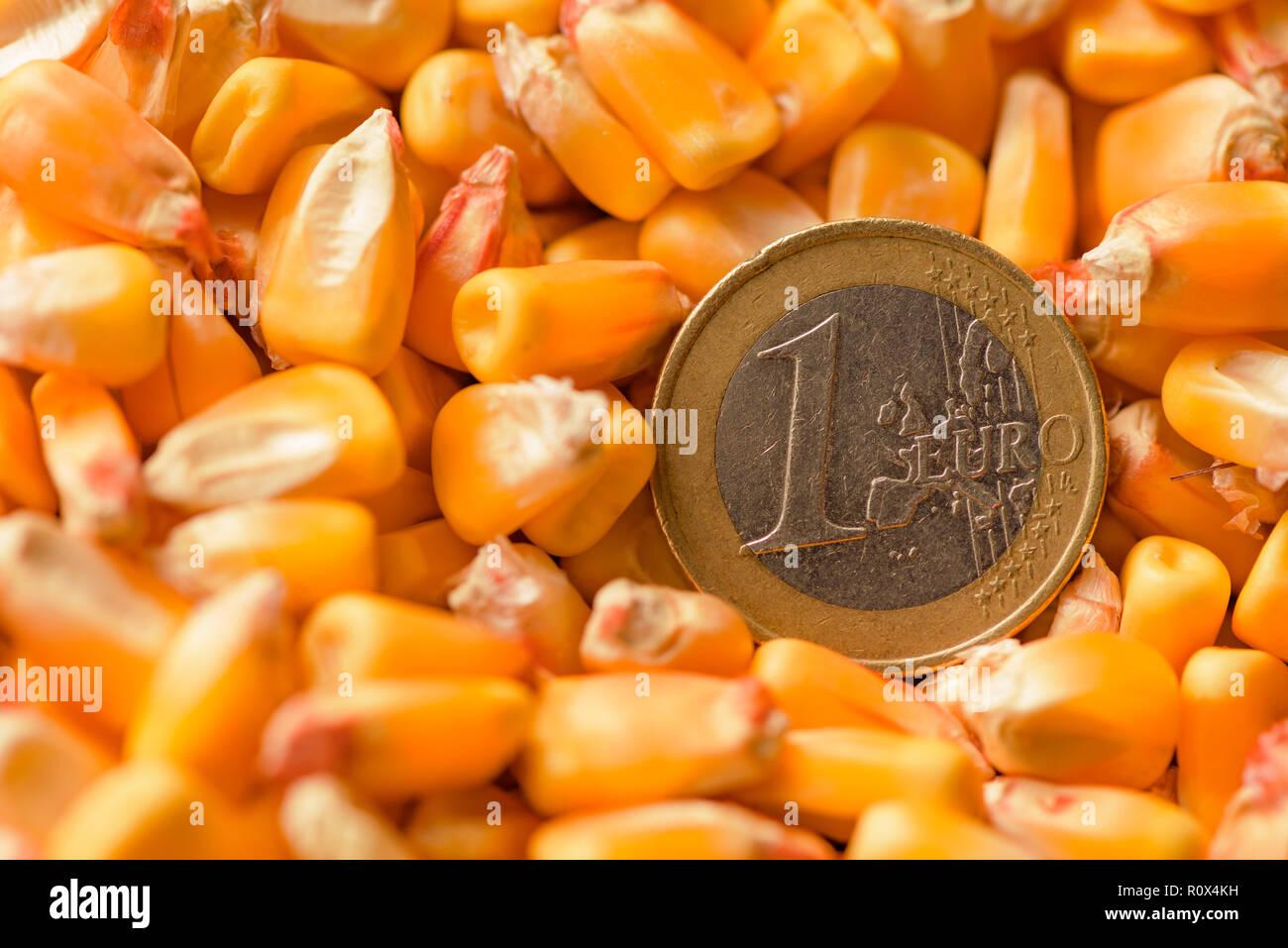 e820c554da Un Euro moneta in raccolte di chicchi di mais, heap immagine concettuale per  il granturco