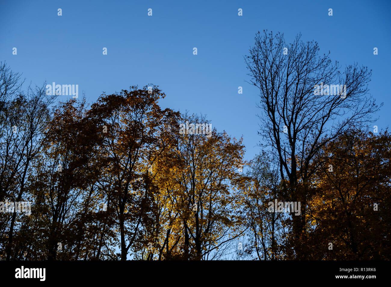 Colorati D Azzurro Chiaro foglie di autunno con il cielo azzurro sfondo. in autunno
